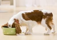hond-in-etensbak