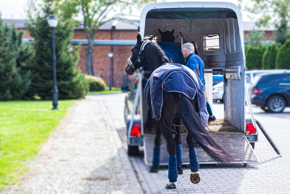 paardentrailer