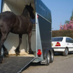 dieren vervoer